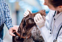 veterinary accounting